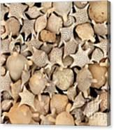 Star Sand Foraminiferans Canvas Print