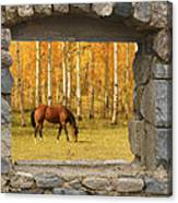 Stone Window View And Beautiful Horse Canvas Print