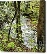 Stream Monongahela National Forest Canvas Print