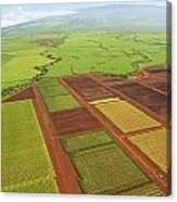 Sugar Cane Fields Canvas Print