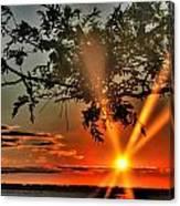 Summers Breeze Sunsets Through Tress Canvas Print