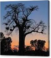 Sunset Baobab Canvas Print