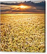 Sunset Wheat Canvas Print