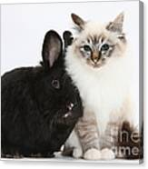 Tabby-point Birman Cat And Black Rabbit Canvas Print