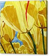 Tender Tulips Canvas Print