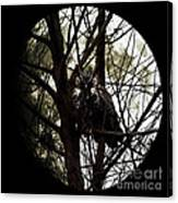 The Night Owl And Harvest Moon Canvas Print