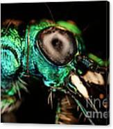 Tiger Beetle Canvas Print