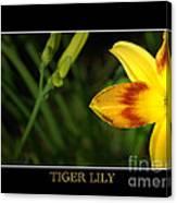 Tiger Lily Canvas Print