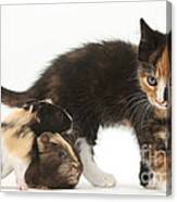 Tortoiseshell Kitten With Baby Canvas Print