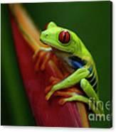 Tree Frog 19 Canvas Print