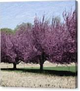 Trees On Warwick Canvas Print