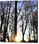 Trees With Sunlight Canvas Print