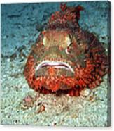 Tropical Fish Scorpionfish Canvas Print