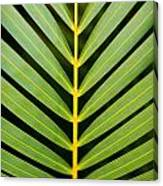 Tropical Palm Frond Canvas Print