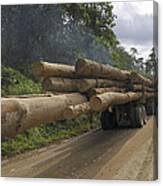 Truck With Timber From A Logging Area Canvas Print