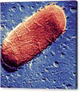 Tuberculosis Bacillum Canvas Print
