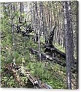 Tunguska Forest Canvas Print