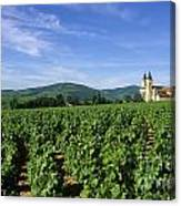 Vineyard. Regnie-durette. Beaujolais Wine Growing Area. Departement Rhone. Region Rhone-alpes. Franc Canvas Print