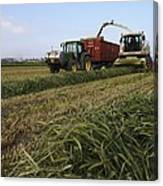 Wheat Harvest For Silage Canvas Print