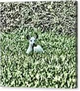White Deer Canvas Print