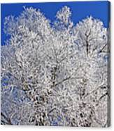 White Frost Tree  Canvas Print