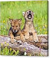 Wolf Cubs On Log Canvas Print
