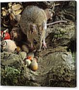 Wood Mouse Feeding Canvas Print