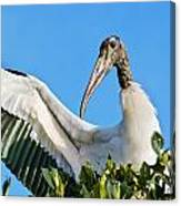 Wood Stork Canvas Print