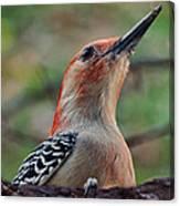 Woodpecker II Canvas Print