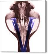 X-ray Of Kodiak Bear Skull Canvas Print