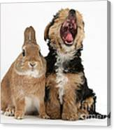 Yorkshire Terrier Pup With Rabbit Canvas Print
