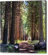 Yosemite Trail Canvas Print