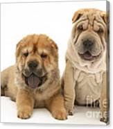 Young Dogs Canvas Print