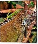 Iguana Lizard Canvas Print