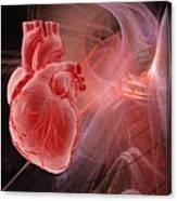 human heart artwork canvas print canvas art by laguna design