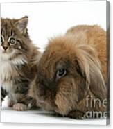 Kitten And Rabbit Canvas Print