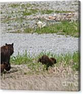 Black Bear Family Canvas Print