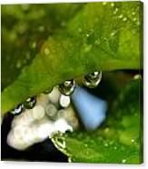 Raindrop On Leaf Canvas Print