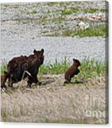 Black Bear Family Canvas Print