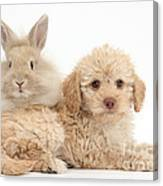 Puppy And Rabbit Canvas Print