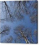 Trees In Epping Forest Canvas Print