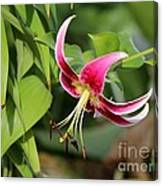 Lily Flowers Canvas Print