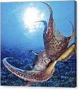 Hawaii, Day Octopus Canvas Print