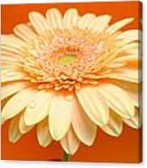 1521-003 Canvas Print