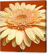 1521c-001 Canvas Print