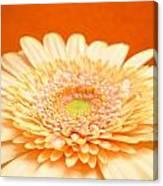 1523-001 Canvas Print