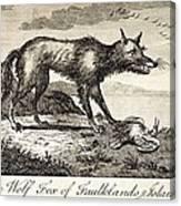 1778 Falkland Islands Wolf Fox Extinct Canvas Print