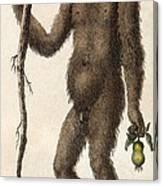 1795 Wild Man Of The Woods - Orangutan. Canvas Print