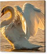 Mute Swan Canvas Print