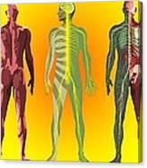 Human Anatomy ,artwork Canvas Print